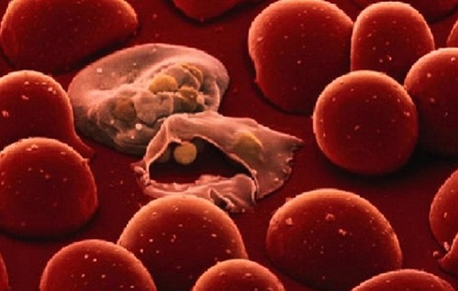 Методы определения наличия глистов в организме