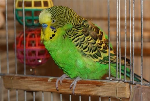 Птица на сквозняке