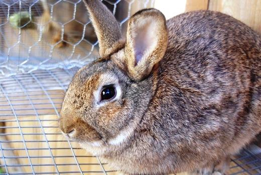 Кролик заболевший поносом