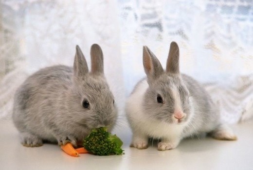 Кролики едят морковку и броколи