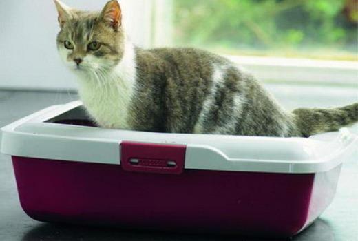 Кошка справляет нужду в лоток