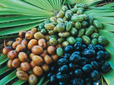 плоды пальмы сабаля