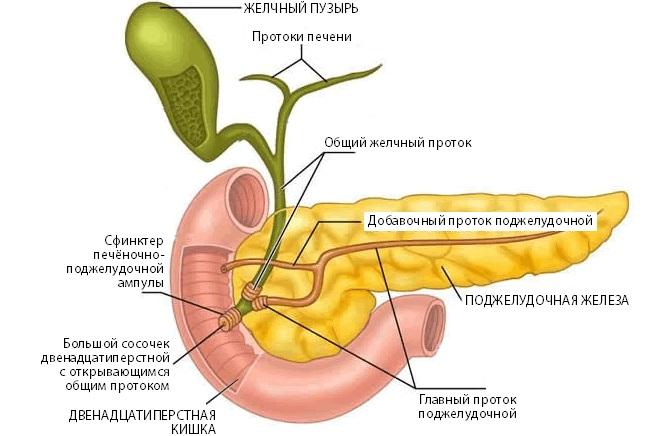 Место развития панкреатита