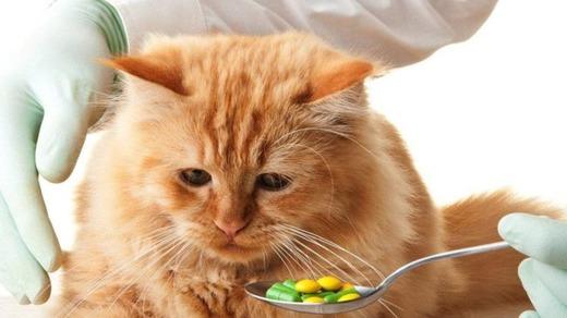 Рыжий кот и таблетки на ложке