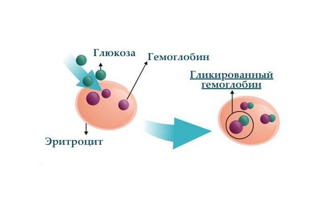 Разбавление гемоглобина глюкозой