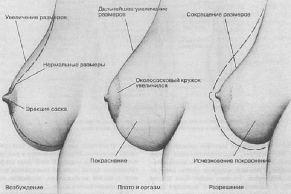 эрекция женской груди