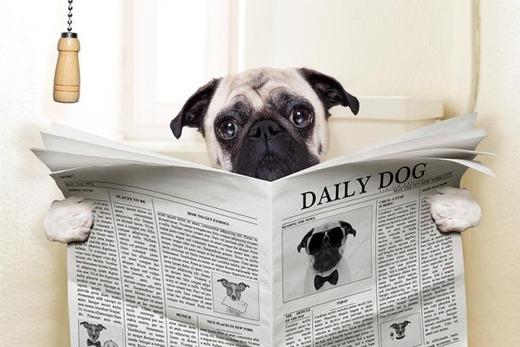 Собачка сидя читает газету