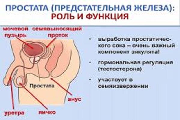 появления простатита