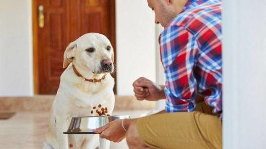 Диетическое кормление собаки