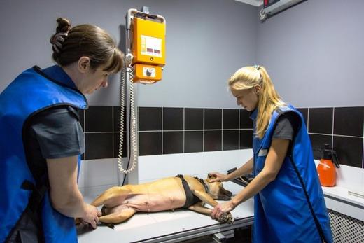 Рентген брюшной полости у собаки