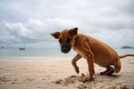 Запущенное заболевание у пса