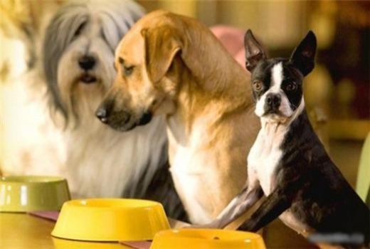 Питание и диета для пса