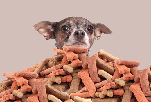 Правильное питание мелких собачек