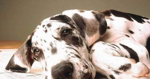 Симптомы болезни у пса