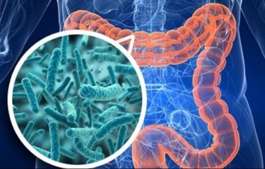 Бациллярная дизентерия в пищеварительной системе