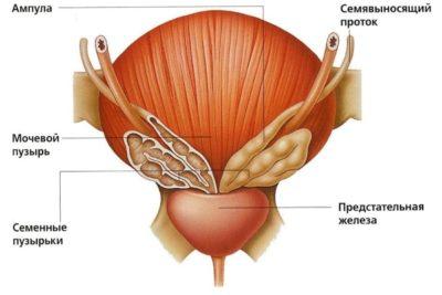 эхопризнаки дгпж хронического простатита