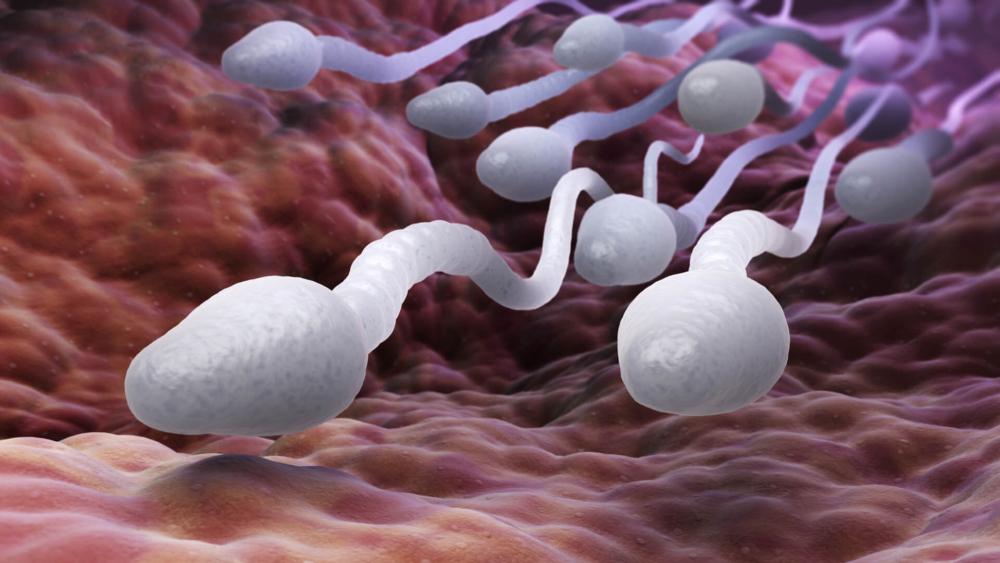Расшифровка анализа спермы: норма, отклонение от нормы и возможные ...