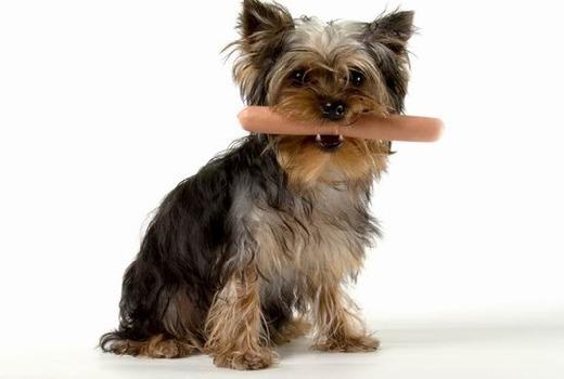 Собачка с сосиской