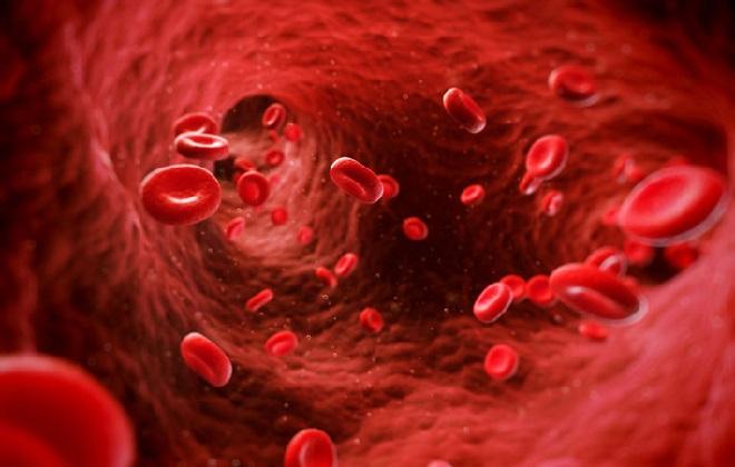 Наполнена витаминами и минералами артериальная кровь человека
