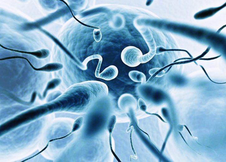 норма лейкоцитов в спермограмме у мужчин