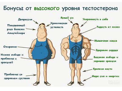 гормон тестостерон у мужчин