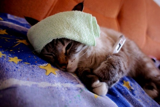 Заболевшая кошка