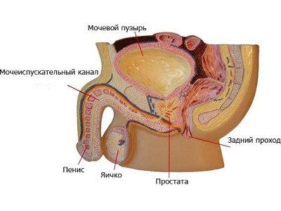массаж простаты через уретру