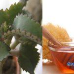 Сок каланхоэ и мед