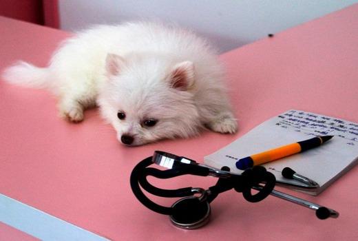 Лечение для собачки