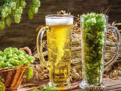 хмель в основе пива воздействие
