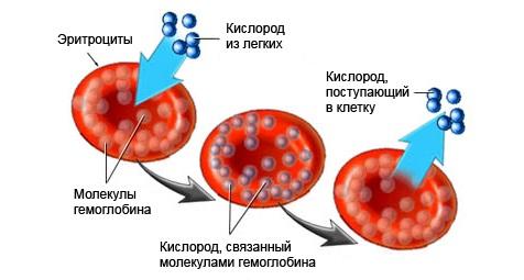 Схема изменения цвета человеческой крови