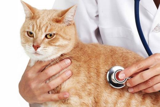 Домашний кот у врача ветеринара