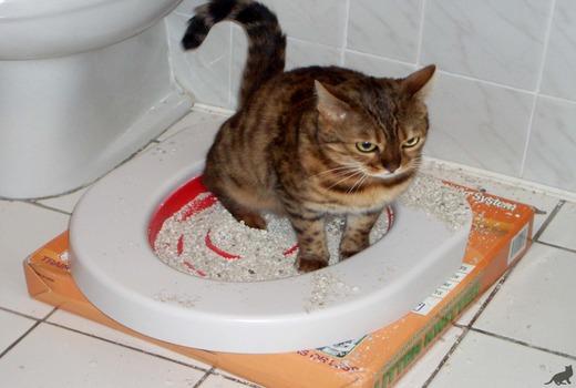 Коричневая кошка на лотке