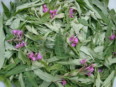 копорский чай листья