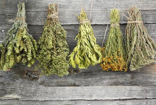 Сбор трав от поноса