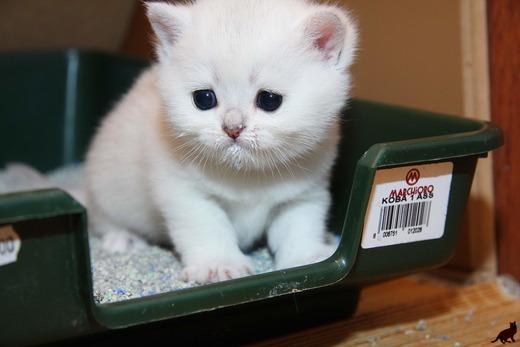 Больной белый котенок