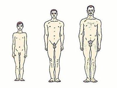 размеры члена