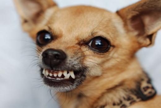Стрессы у собачки