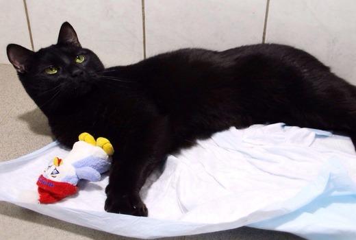 Черная кошка на кроватке