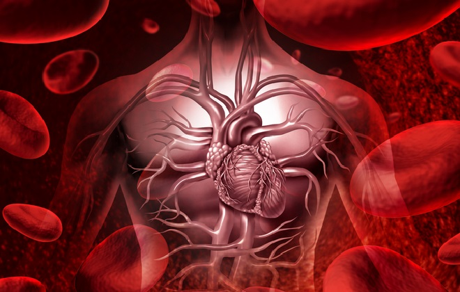 Правильная форма тромбоцитов в крови человека
