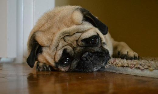 Формы расстройства желудка у собаки