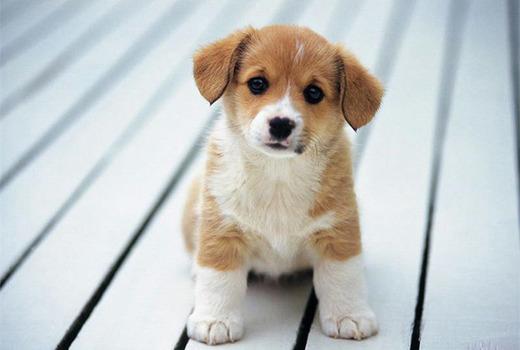 Расстройства ЖКТ у щенка