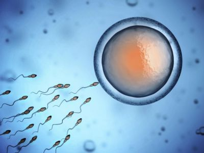 мужская сперма действие