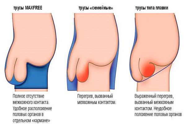 постепенный рост пениса