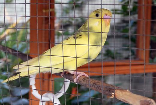 Профилактика поноса у птиц