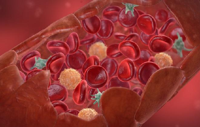 Схематическое изображение структуры крови