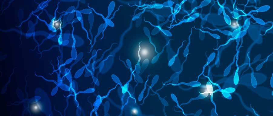 Акинозооспермия и акиноспермия: причины, симптомы, диагностика, лечение