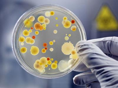 enterococcus faecalis в секрете простаты