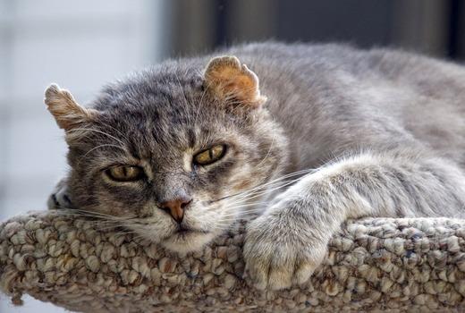 Кот со спазмами желудка