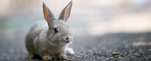 Заболевший кролик-детеныш